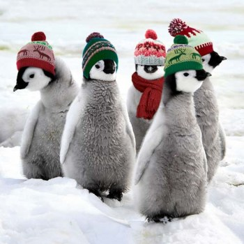Penguins-with-Hats